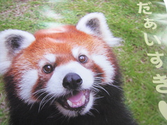 IMG_cute-panda.JPG