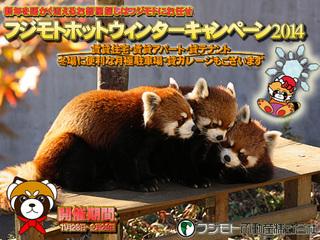 Pandawinterweb512.jpg